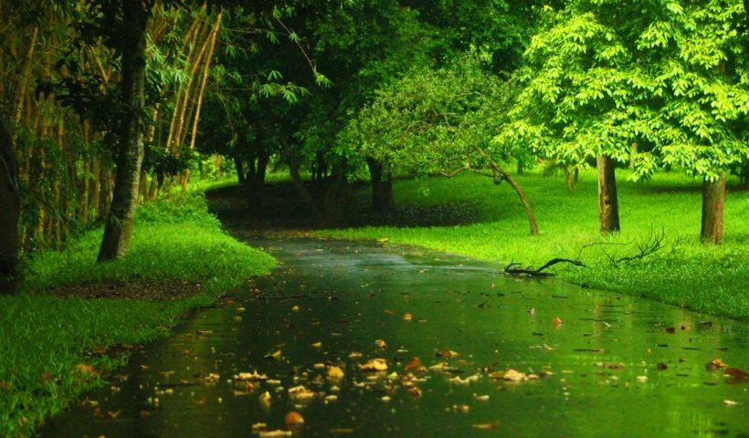 Treedom in soccorso della terra: Let's Green the Planet - (foto dal web).